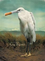 2013 cig_egret coastal cleanup