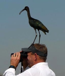 ibis_side