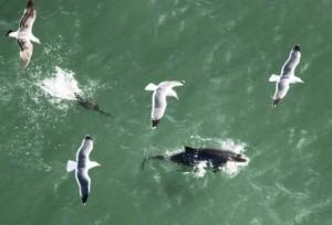 cara harbor porpoise
